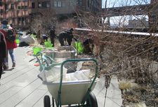 Workers planting in High Line Park at the end of a New York winter
