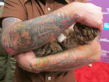 Lil Bub in Mike Bridavsky's arms on the Tribeca Film Festival red carpet at the world premiere for Lil Bub & Friendz