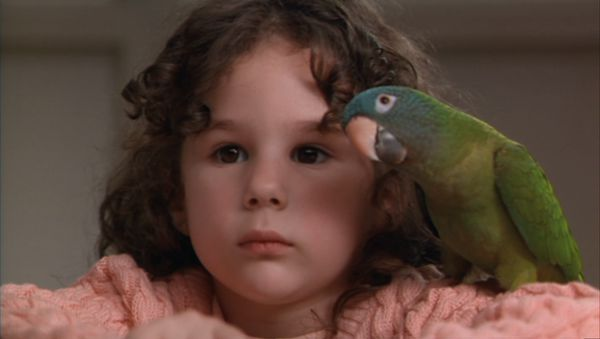Paulie de Paulie: aves protagonistas de películas
