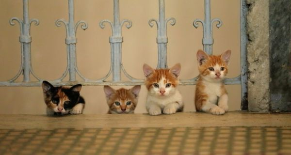 Sari's kittens in Ceyda Torun's KEDi, her sharp-eyed documentary on what it means to be a cat in present day Istanbul.
