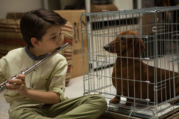 Wiener-Dog - this film tells several stories featuring people who find their life inspired or changed by one particular dachshund, who seems to be spreading comfort and joy.
