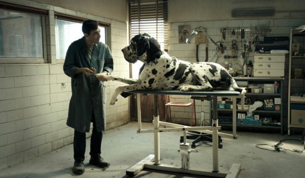 'Dogman' Movie Review: Revenge, Served Italian and Off the ...
