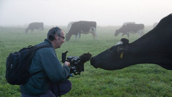 Andy Heathcote and Ida the cow have a conversation as he shoots The Moo Man