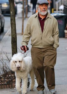 "Dustin Hoffman as Harold out walking with poodle Bruno in The Meyerowtiz Stories. Bruno has won the Palm Dog award. Harold is hospitalised after a head injury he received while walking the poodle (""You should see the other dog,"" his character jokes)."