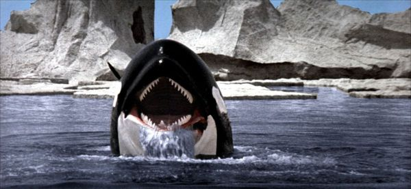 Orca the killer whale movie - photo#8