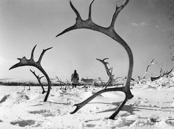 Image result for Erik Blomberg the white reindeer